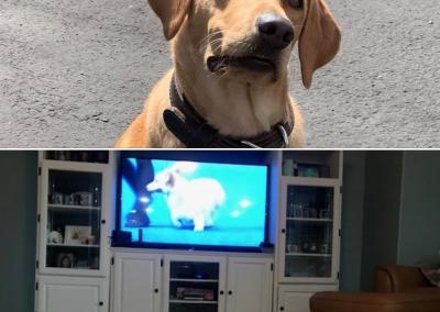 Bomb Dog Enjoys Dog TV