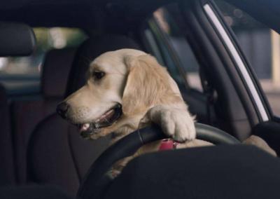 Pets in Hot Cars Penalties